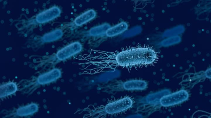 desinfección listeriosis. como se desinfecta la listeria.
