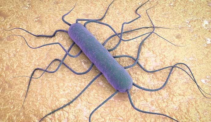 Listeria, la bacteria que puede matar