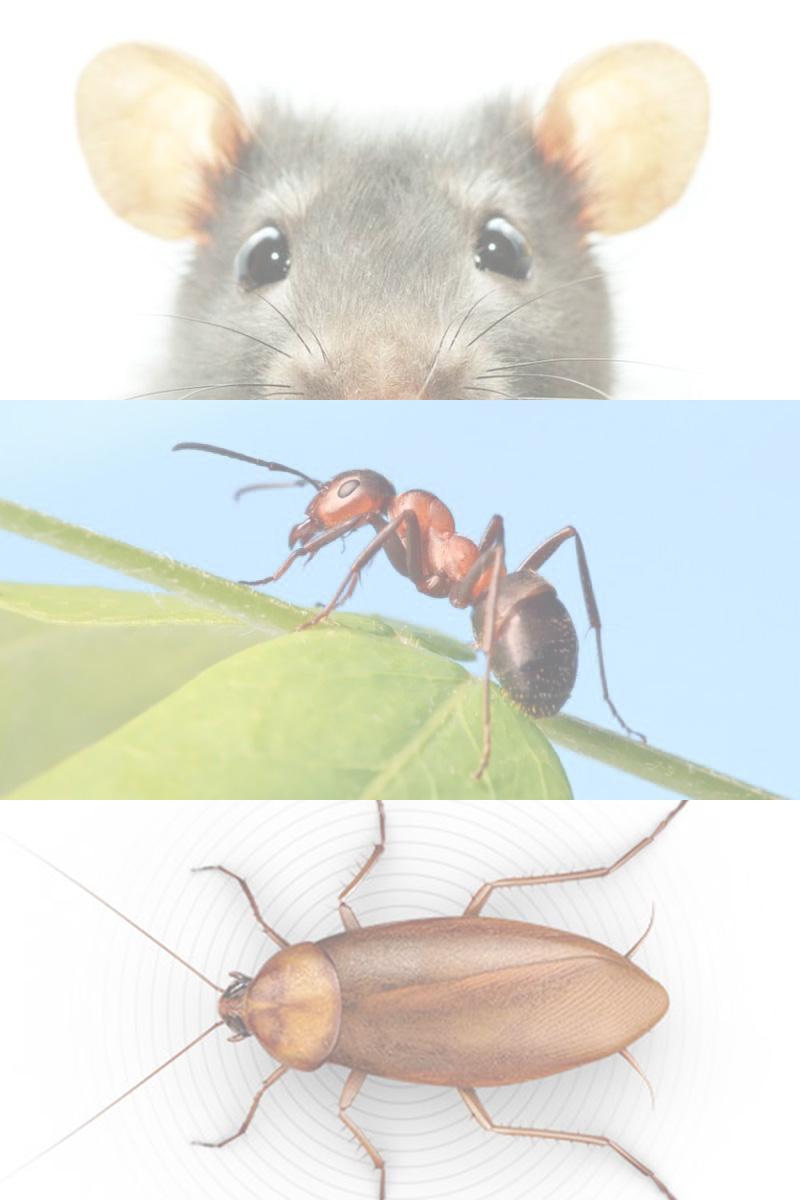 Control de plagas. Desinsectación y desratización