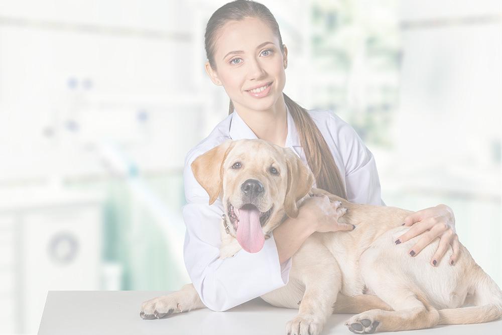 Desinfección de clínicas veterinarias